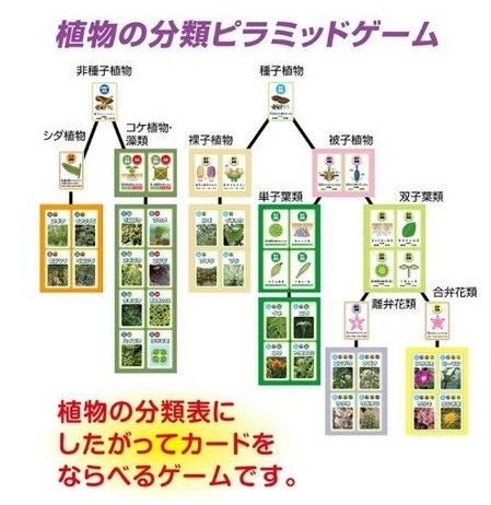 kyouzai-j_a055723_4.jpg